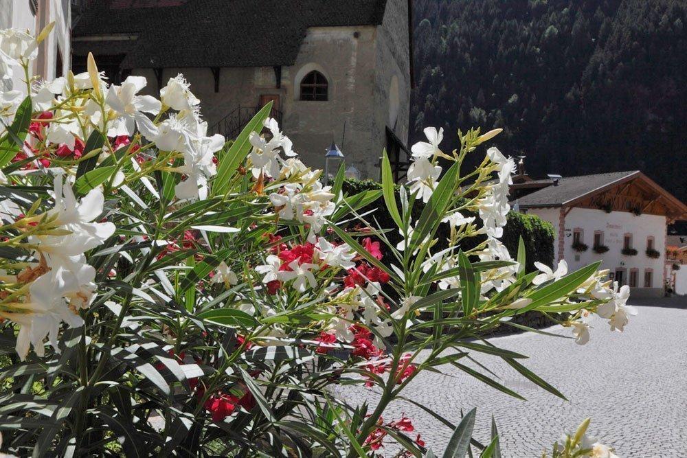 Primavera a Merano e Dintorni – Meravigliose vacanze in un ambiente mediterraneo
